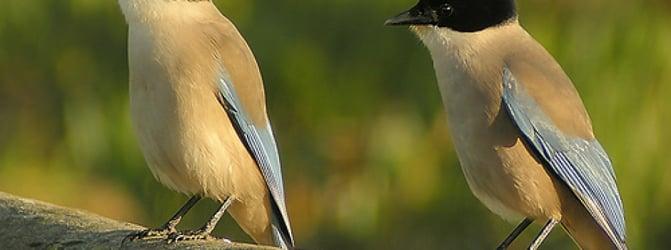 Aves de Portugal (Birds of Portugal)