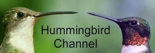 Hummingbird Channel