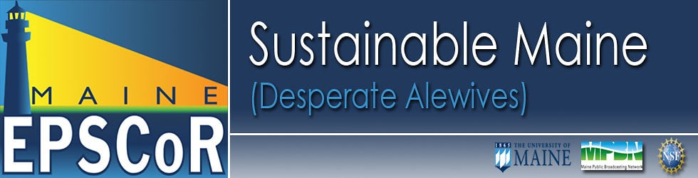SUSTAINABLE MAINE: Desperate Alewives