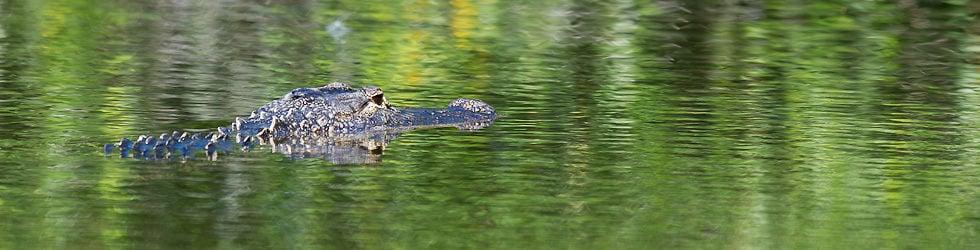 Everglades National Park- HD