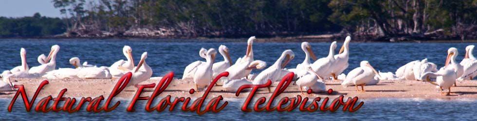 Natural Florida Television