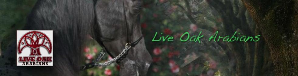 Live Oak Arabians
