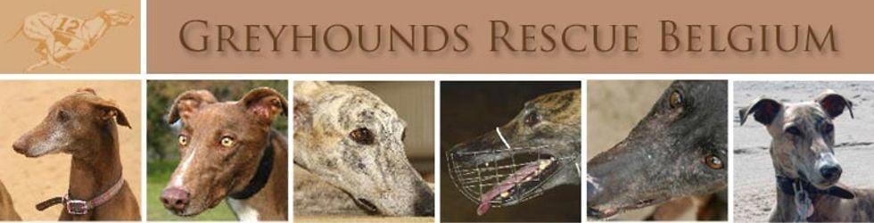 greyhoundsrescue