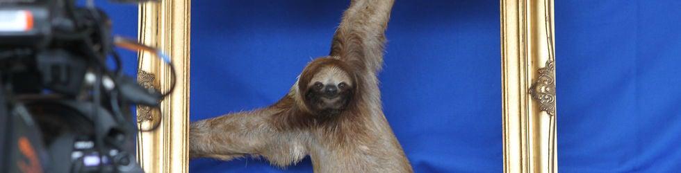 Sloth TV