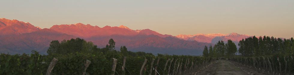 Argento Wine - The Real Argentina