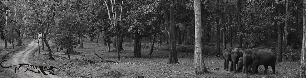 Conservation India (CI)