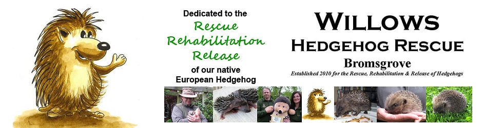 Willows Hedgehog Rescue - CharlieCreek