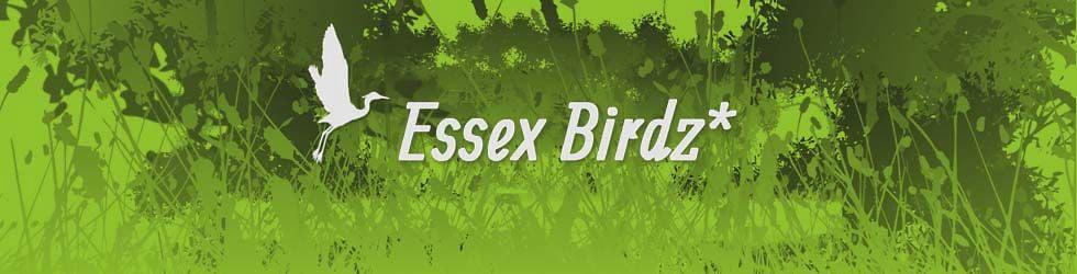 Essex Birdz*
