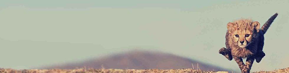 Run like a cheetah