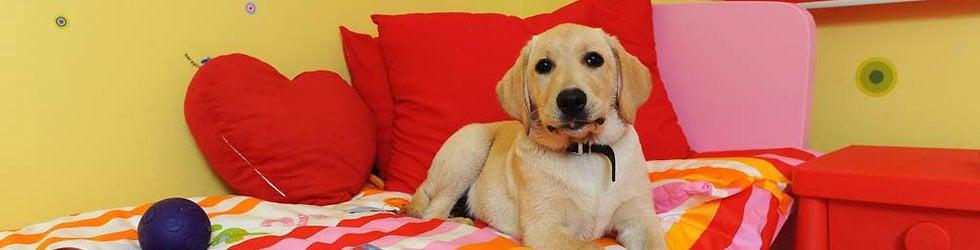 Royvon Dog Training and Boarding