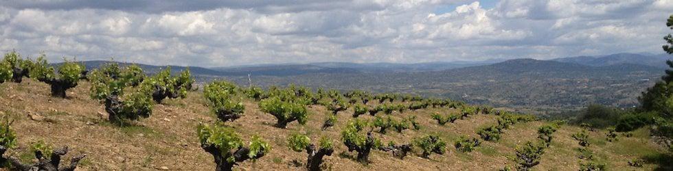 Planeta Vino wine reviews