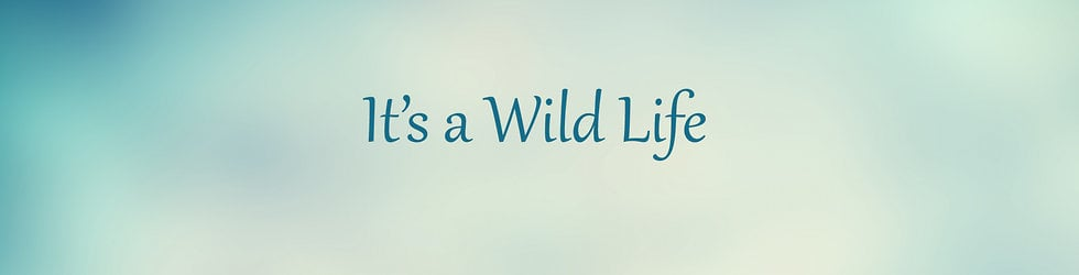 Its a Wild Life
