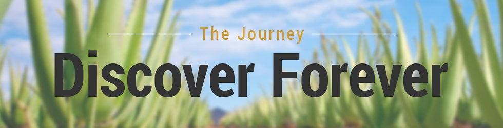 Take a Journey - The Forever Story