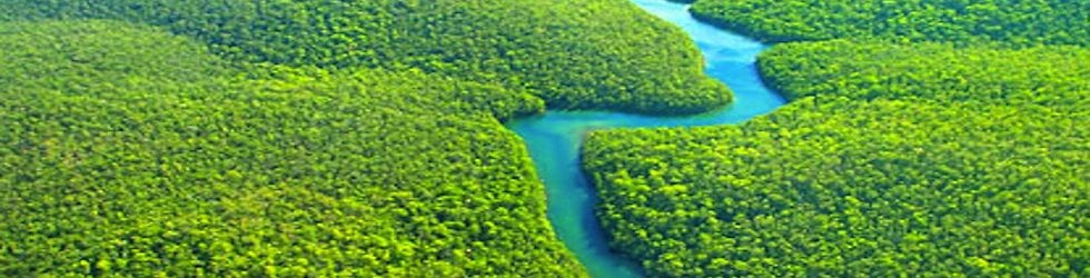 Forests 4 Climate News