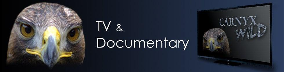 TV & Documentary