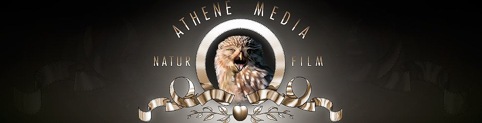 athene media HD