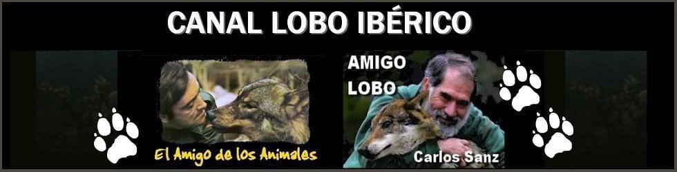 Lobo Ibérico - Félix Rodríguez de la Fuente - Canal Lobero