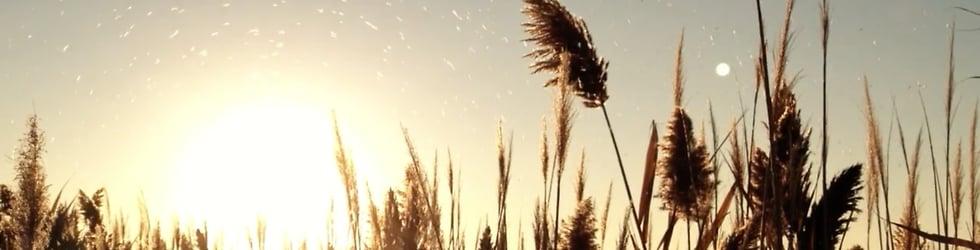 My Vimeo favorites