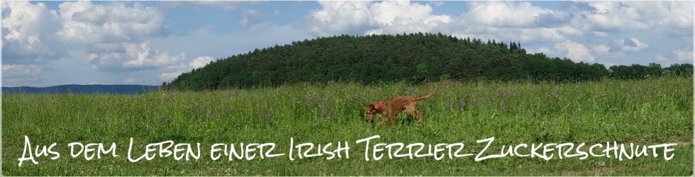 Aus dem Leben einer Irish Terrier Zuckerschnute