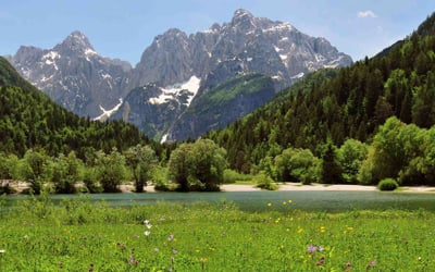 Za in Proti Slovenia