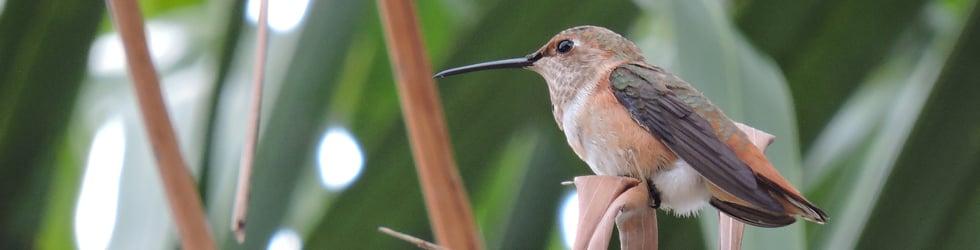 Beautiful Bird Videos