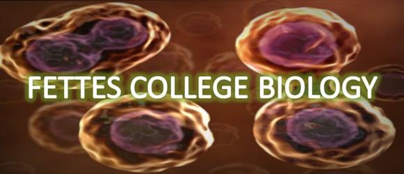 Biology Animations