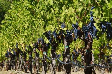 Jim Spadoni: wine & food stories