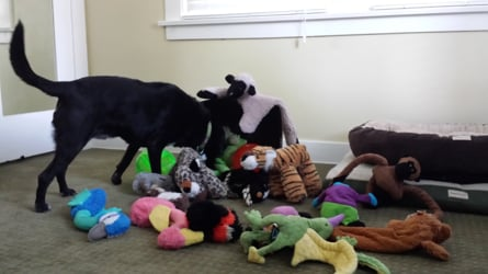 Doggy Dak Toys