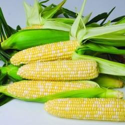 Crookham Sweet Corn Varieties