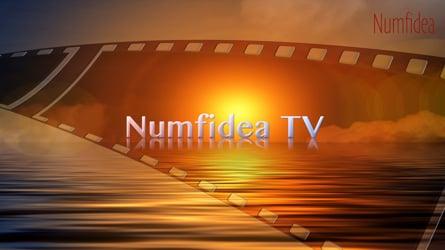 Numfidea