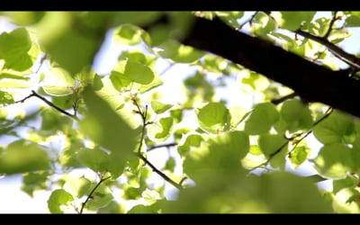 17: Esikaupunkien Sinfonia (Symffoni Maesdref / Suburban Symphony)