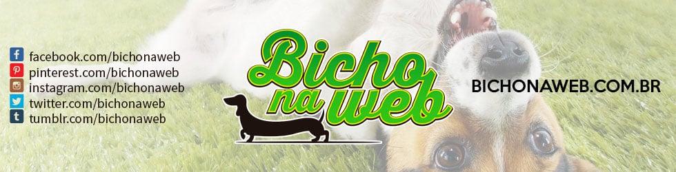 Bichonaweb