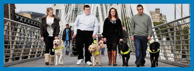 Walk My Way - Guide Dogs NI
