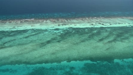 """""""Someday Is Now!"""" and """"Reefs for People"""" – films and videos on The Belize Reef"""