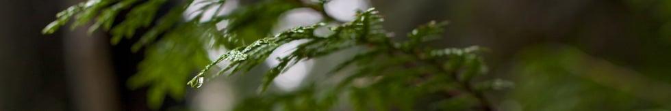 Evergreen & Bound Films