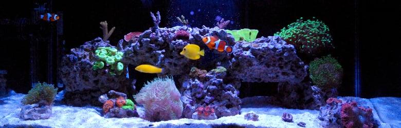 Reef Hobbyist