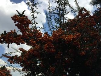 Dullstroom Accommodation: Treelands