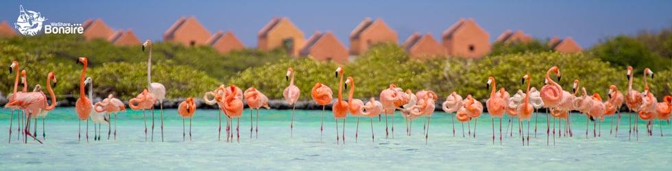 We Share Bonaire