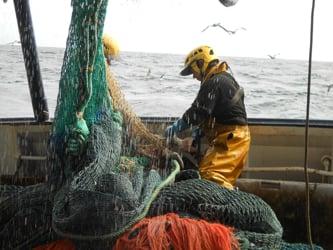 Un regard vers la pêche Bretonne