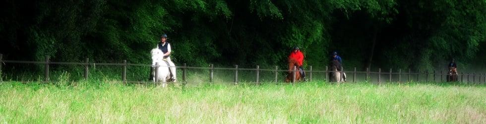 Helmut's Horse Picks
