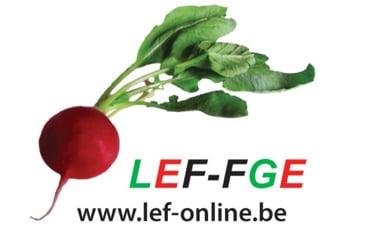 LEF/FGE