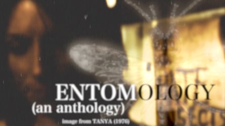 Entomology: The Bees and Vampires Edition.
