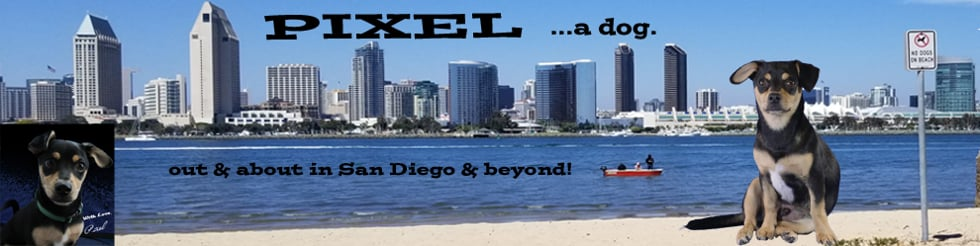 PIXEL ...a Dog, out & about in San Diego & beyond