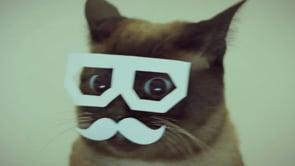 You Like Cats? We Like Cats.