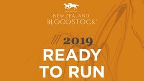 2019 NZB Ready to Run Sale of 2YO - Lot-by-Lot Footage