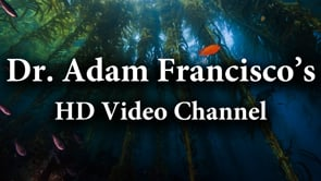 Dr. Adam Francisco HD