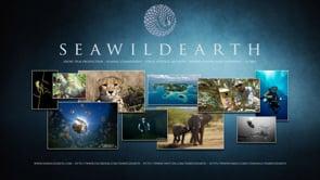 Sea Wild Earth