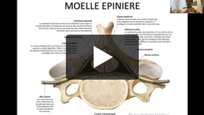 27.11.2020 Anatomie de la colonne vertébrale Dr M. & R. Messerer