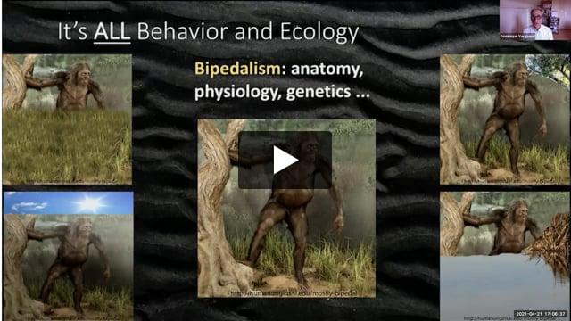Webinar: Comment l'Homo sapiens s'est mis à courir (2021-04-21)