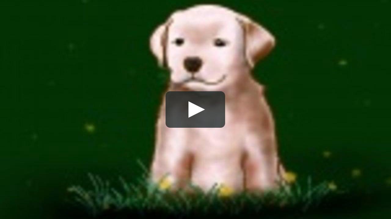 how to draw a labrador puppy